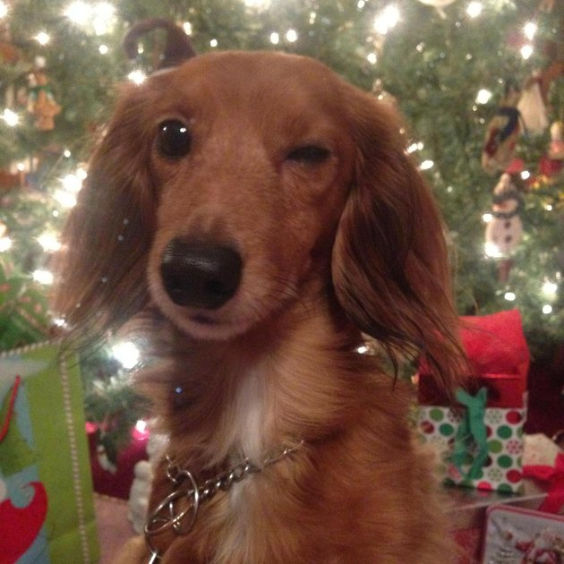 Animals Who Epitomize Christmas Morning Excitement
