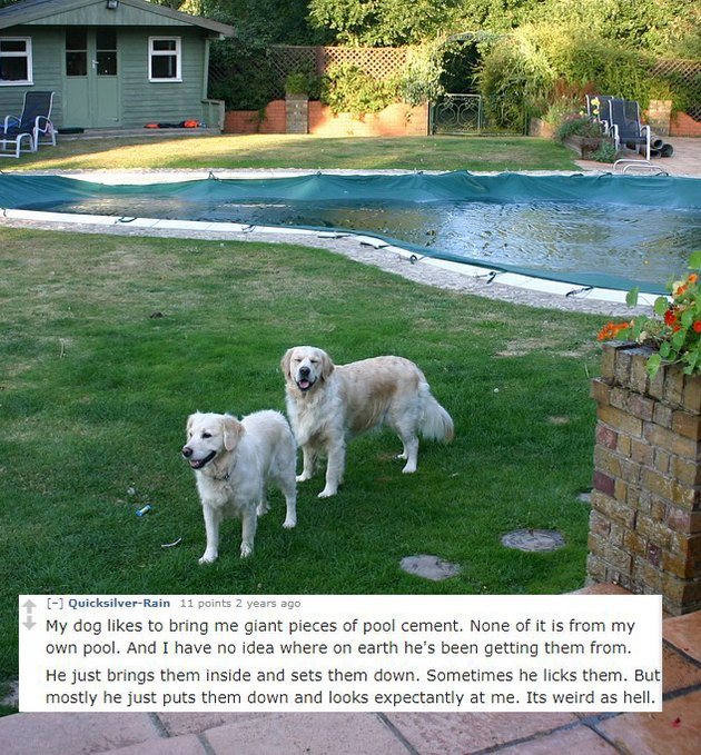 Two dogs near a swimming pool.