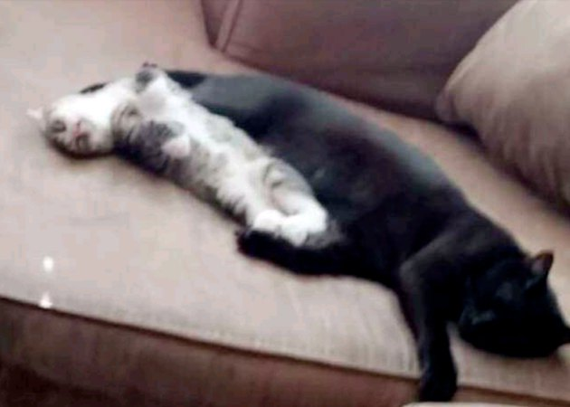 Two cats lying on a couch