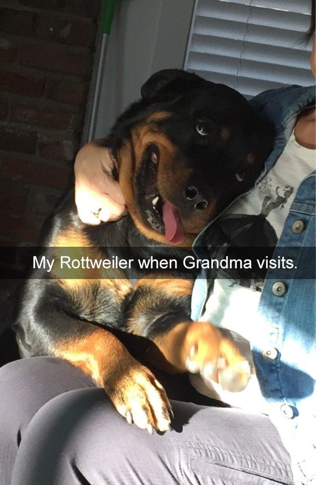 Dog with a goofy expression cuddling human.