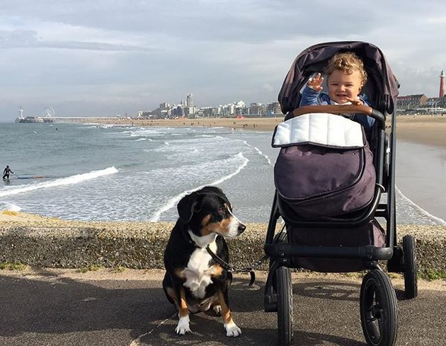 Dog and baby in stroller
