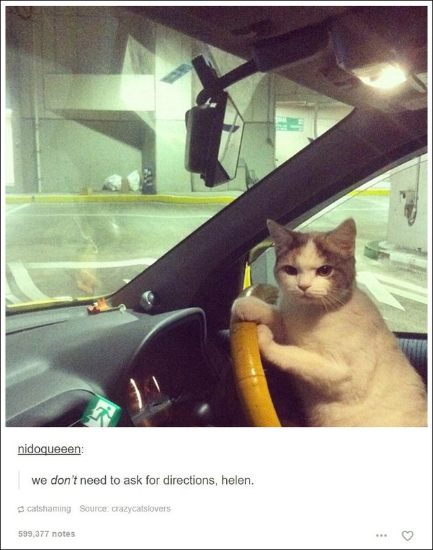 21 Tumblr posts about cats that will never not be funny