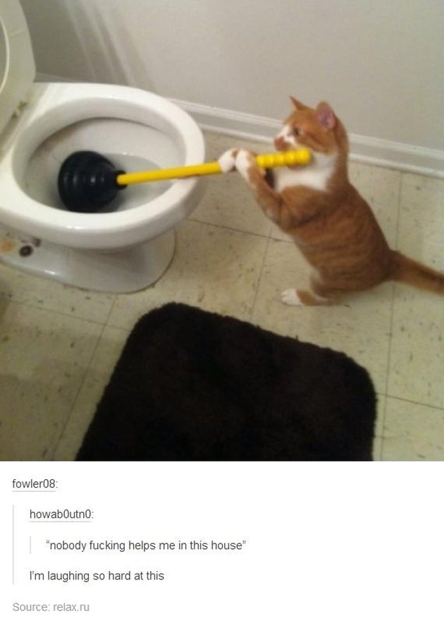 Just 20 Hilarious Animal Pictures