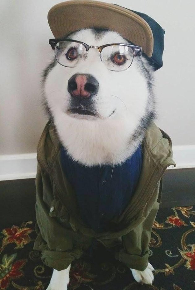 Dog in baseball hat, glasses, shirt, and jacket