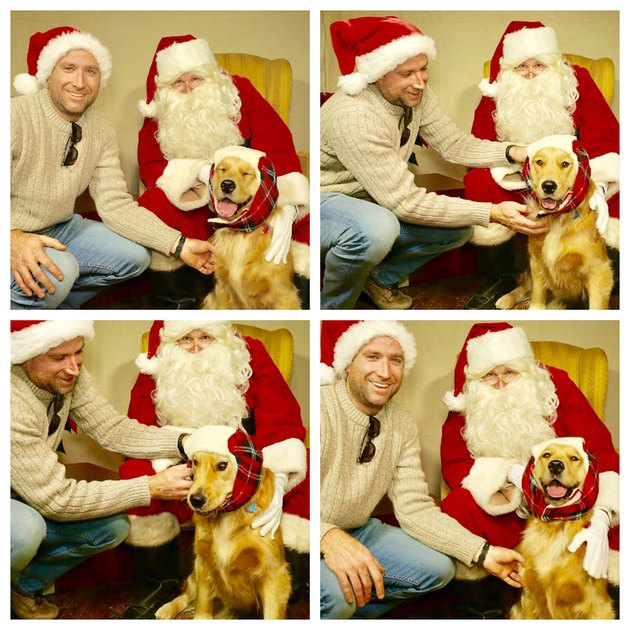 Photo set of happy dog in trapper hat posing next to Santa.