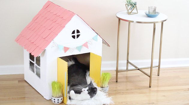kitty laying inside cat house