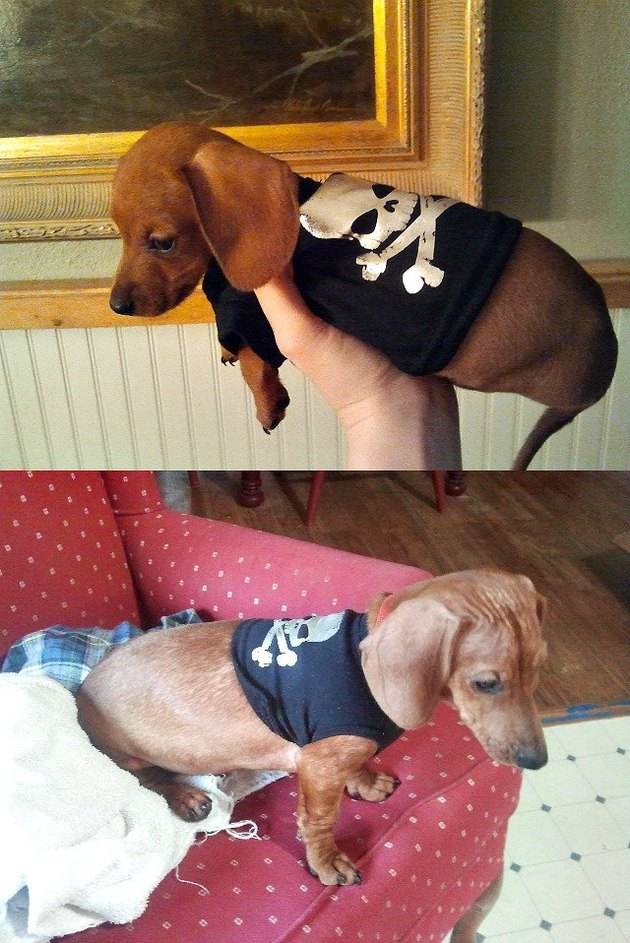 Side by side photos of dog in a t-shirt as a puppy and dog as an adult.