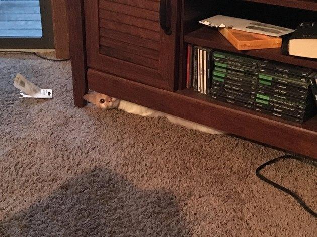 Cat hides under entertainment center