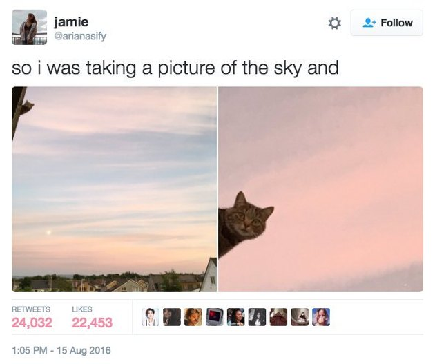Cat photobombing a picture of a sunset.