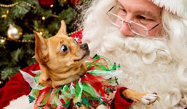 Dog looking at Santa with surprise.