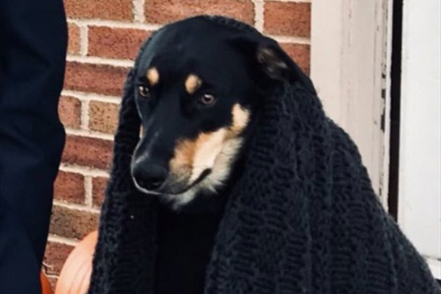 Dog Fakes Being Sick So His Family Will Stay Home With Him