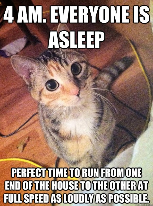 Wide awake cat.