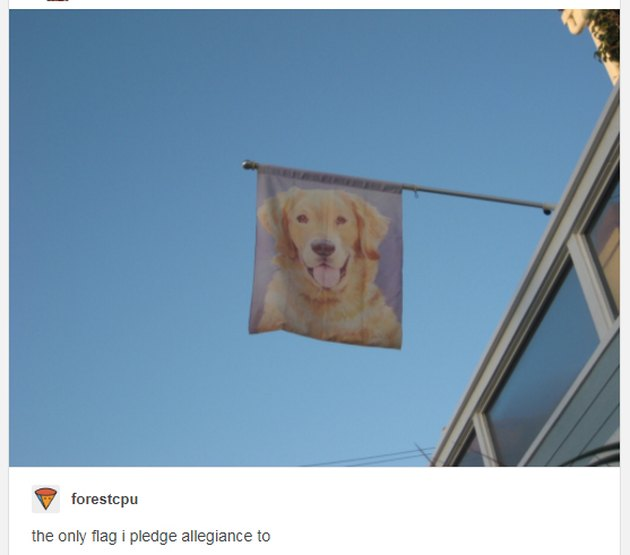 Flag printed with dog's face.