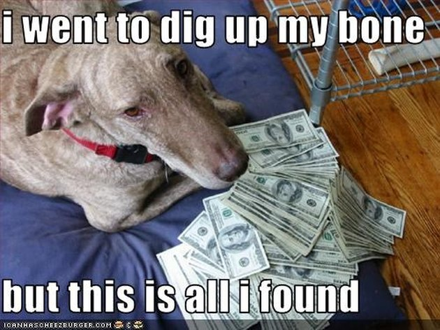 Dog lays next to pile of money.
