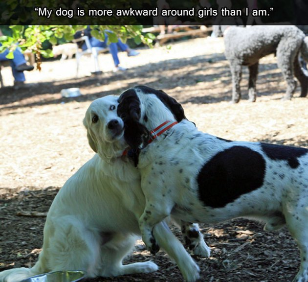 Dog looks uncomfortable with other dog.