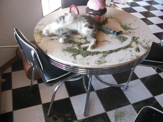 Cat asleep on a table with catnip