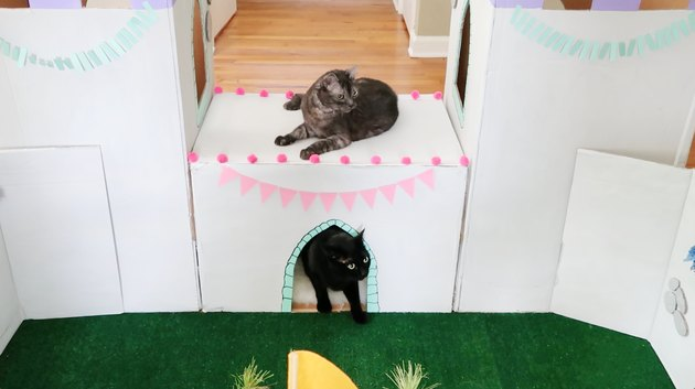 Two cats playing on drawbridge