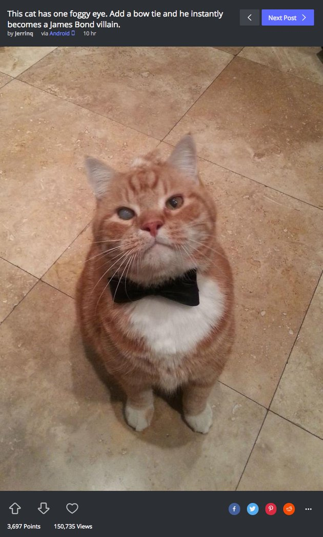James Bond villain cat