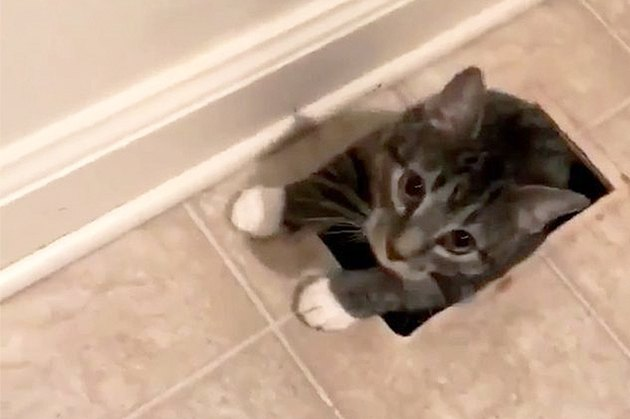 Woman STUNNED To Find Unknown Cat Crawling Out Of Floor Vent