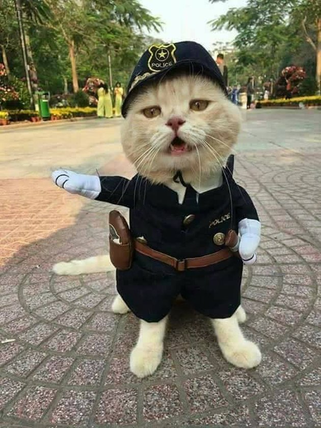 Cat cosplays as traffic cop