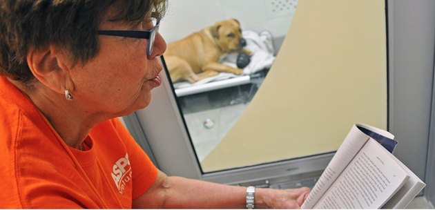 Reading Aloud Helps Dogs Recover From Trauma