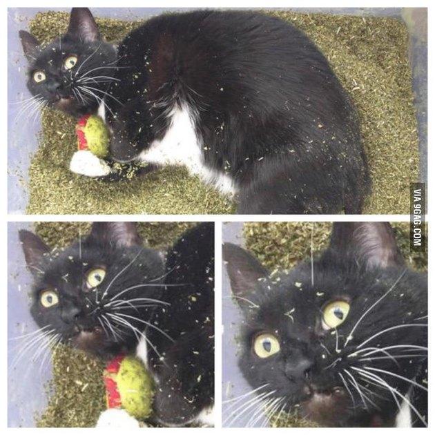 When the catnip high hits