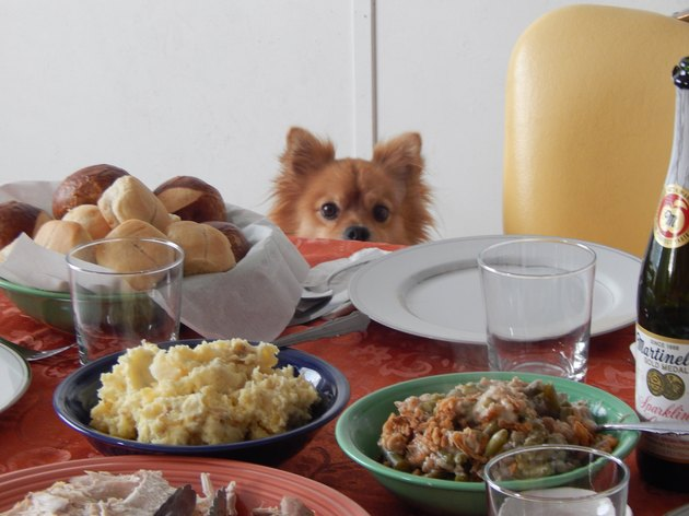 Dog at Thanksgiving table