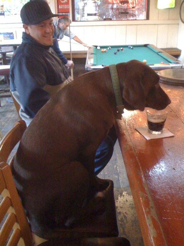 Dog sitting at a bar