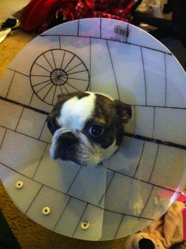 Dog wearing E-collar styled like the Death Star