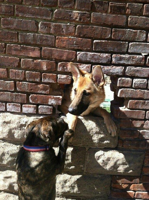 Dog greeting dog through hole in brick wall.