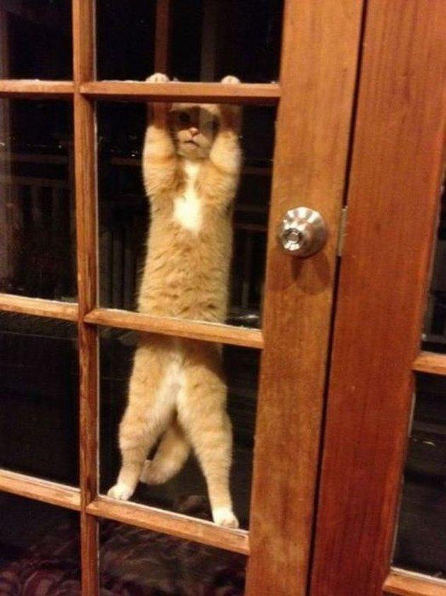 Cat clinging to front door.
