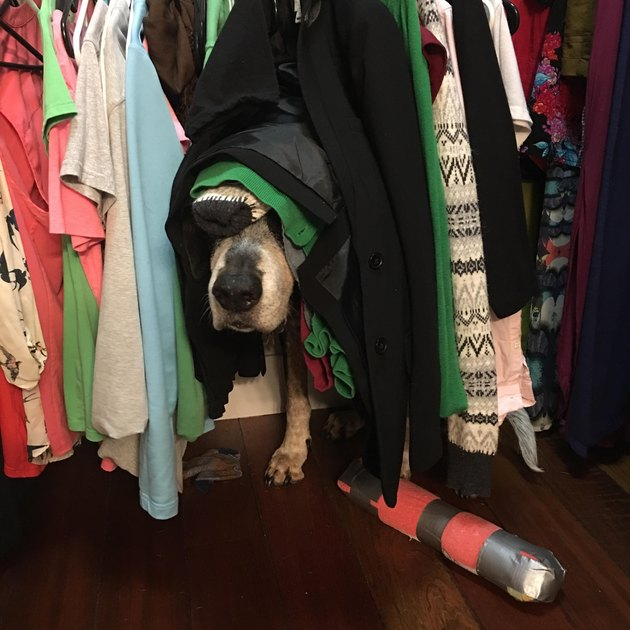 Dog hiding in closet underneath t-shirts.