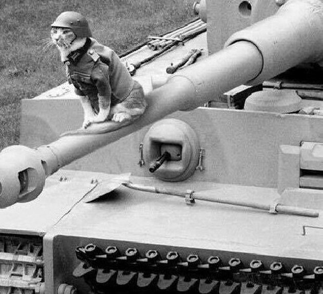 Black and white photo of a cat wearing an army uniform and sitting on a tank.