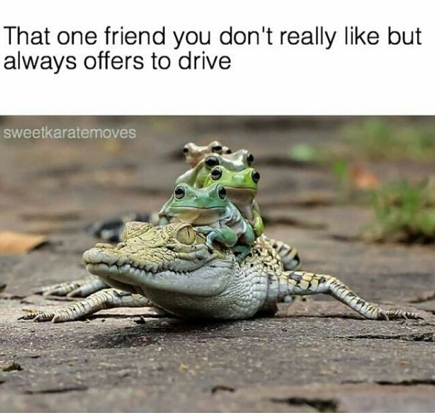 Frogs riding on the back of baby crocodile
