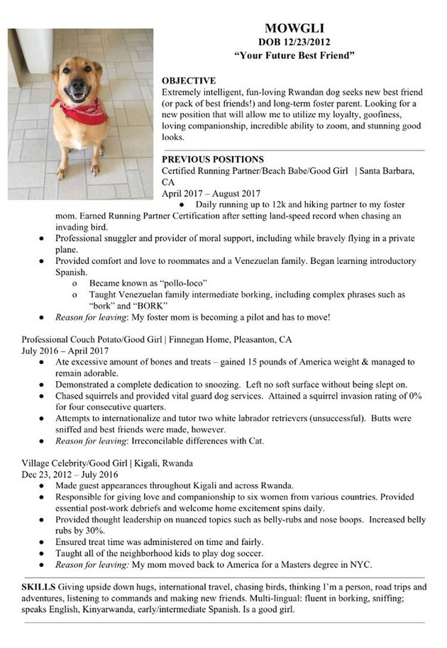 This Foster Dog's Resume Will Melt You