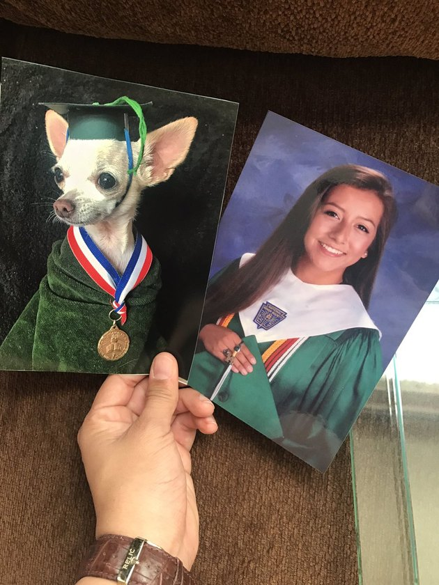 College student pranks mom by replacing family portraits with pics of chihuahua