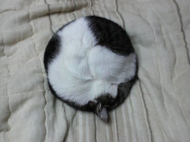 Cat sleeping in a circle