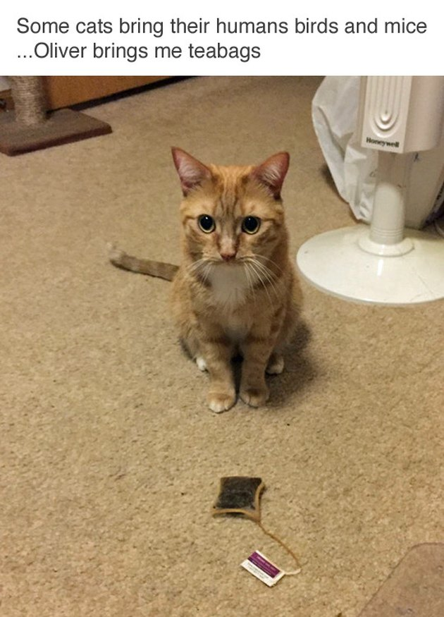 Cat sitting in front of a tea bag. Caption: Some cats bring their humans birds and mice... Oliver brings me teabags