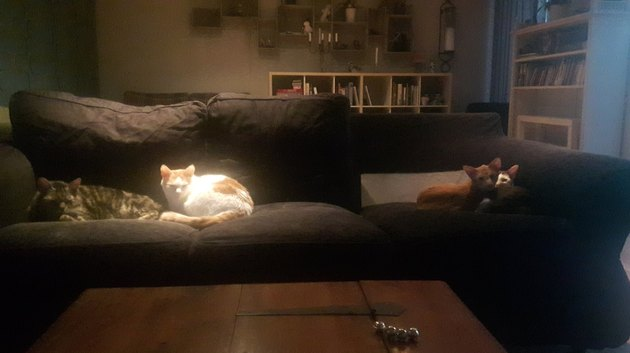 Owner has questions after cat plays Tetris with couch cushions