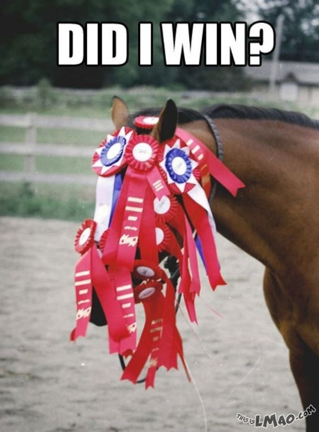 Horse covered in prize ribbons.