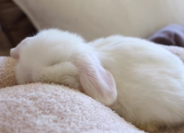 Baby Bunnies Sleeping Like Weirdos