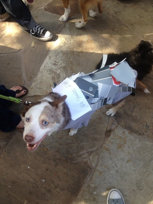 Dog wearing fifty shades of gray paint samples