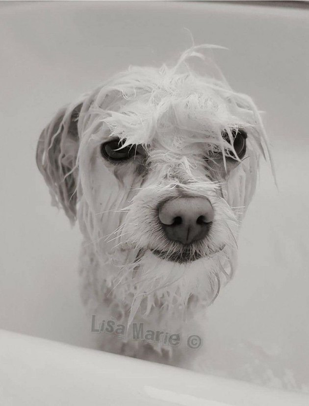 31 sad-eyed puppies who can't believe they have to take baths