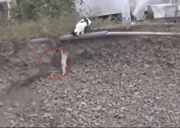 This Incredible Cat Saved A Puppy Who Was Stuck In A Ditch