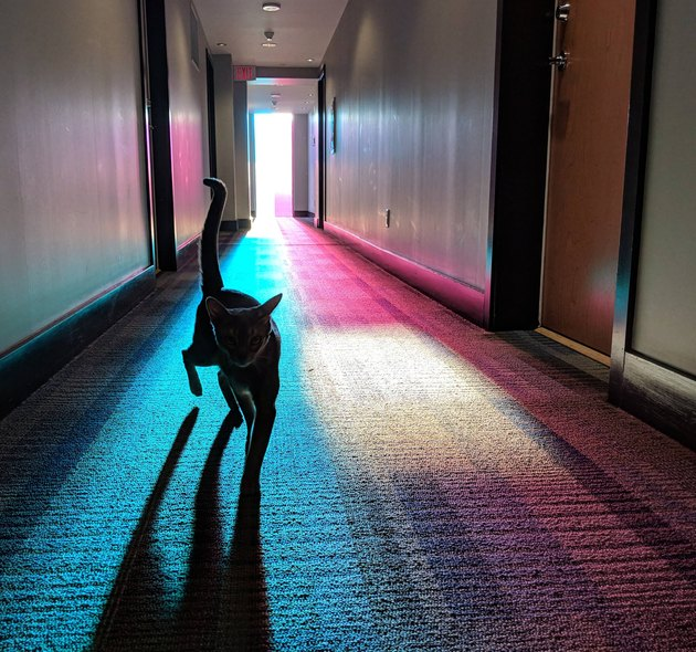 Cat in a hallway with multicolored lights.