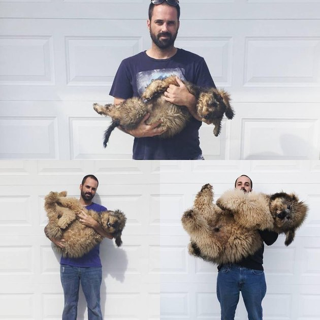 Photo set of puppy growing up to look like a bear