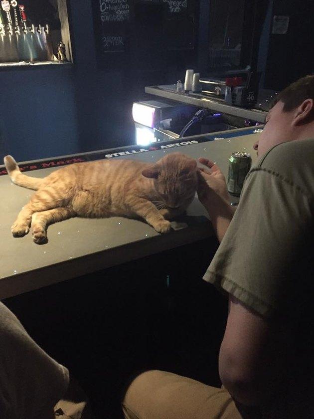 cairo getting bar pets