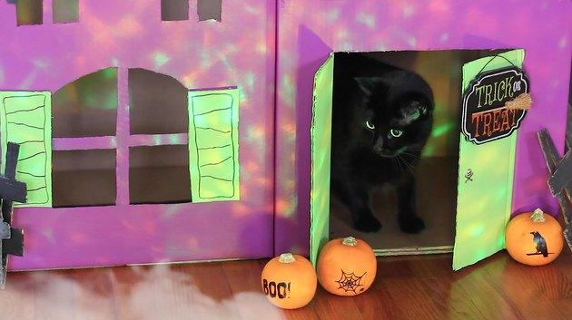 Cat sitting inside haunted pet house