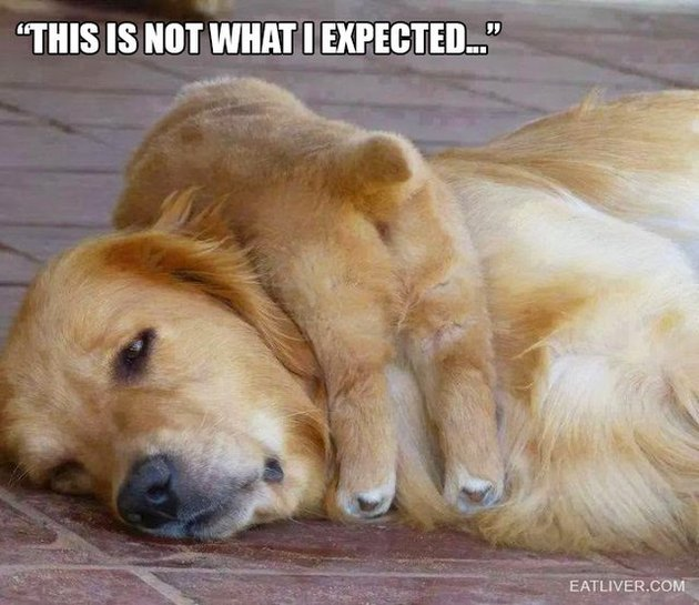 23 Animals Who Are So OVER Parenting