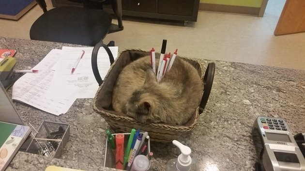 Cat sleeping in a basket being used as a pen holder
